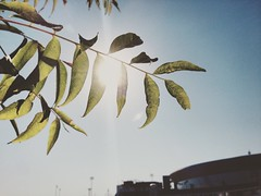 Stockton California. (Mr.Machain) Tags: sunray sunflare greenleafs leaf downtownstockton california northerncali stocktonca stocktonstadium stadium sky sun