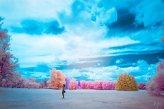 Real, Imaginary, and Everything in Between (jrseikaly) Tags: montral qubec canada ca infrared color trees nature montreal quebec jack seikaly outdoor ir multicolor colorful botanical gardens plant nour hdr portrait photoshop