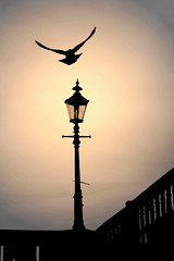 prayer (Wackelaugen) Tags: lantern sunset silhouette silhouettes lamp bird nature hamburg jungfernstieg germany canon eos photo photography wackelaugen googlies explore explored