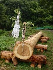 sacred tree (yukohayashi2) Tags:   suwataisha onbashira sacredtree