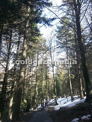 20160329_124550 (coldgazemedia) Tags: switzerland ticino cardada cimetta lepontinealps alps swissalps snowmountain winter bluesky blue snow hiking mountain lakemaggiore photobank stockphoto skiresort skiing outdoor landscape scenery people children woods tree locarno