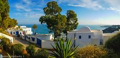 Tunisi (johnfranky_t) Tags: tunisi tunis johnfranky costa palma eucalipto eucalyptus mare mediterraneo cancelli cupole
