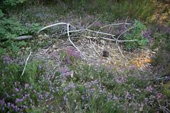 El ciclo de la vida (Testigo Indirecto) Tags: life vida ciclo cycle desintegration desintegrndose death muerte nature sadness alone quiet tranquilidad paz belleza enviroment woods bosque