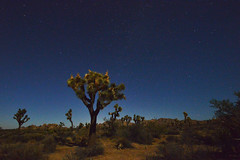 Joshua Tree National Park (Six Sigma Man (Thanks for the 2.1 Million views)) Tags: joshuatreenationalpark joshuatree california night nikon nikond3200 timeexposure longexposure 1001nights desert 1001nightsmagiccity