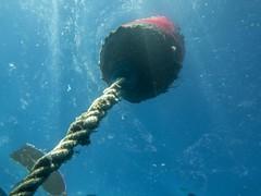 PA070702.jpg (Michael Bartosek) Tags: olympusepl3 catalinaisland olympus1442mm underwater catalina diving california pacificocean