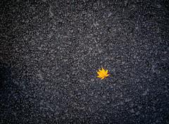 Autumn on Asphalt (Dinozauw) Tags: asphalt road tarmac mapleleaf leaf autumn fall southkorea seoul seoultower artistic abstract lonely single orange black tamron14150mmf3558diiii acerpseudosieboldianum purplebloommaple koreanmaple color dried outdoor leaves solitary singleleaf offcentre
