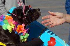 DSC05974 (liverpix) Tags: cleo dog performing anthonywalsh photowalk 500px liverpool pierhead liverbuilding ballerina ballet