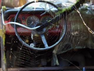 Les araignées reprennent la main