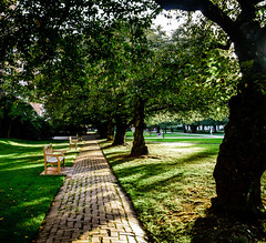 UW Seattle Quad (samlar97) Tags: uw university washington quad outdoors light sunset park