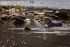 I'm an otter (mattd85) Tags: scotland lochlomand fun water splash cold adventure portrait