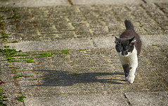 On the move (gill4kleuren - 20 ml views) Tags: cat eyes beauty red kitten kitty kat little playing pet animal collage pussycat pussy poezen poes outdoor world shunset hair mammal indoor people puss jong young katze chat minou mieze gata gato gatta katje gatto kater photoadd
