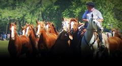 Retrato tropillero (Eduardo Amorim) Tags: cavalos caballos horses chevaux cavalli pferde caballo horse cheval cavallo pferd cavalo cavall tropilla tropilha herd tropillas tropilhas 馬 حصان 马 лошадь crioulo criollo crioulos criollos cavalocrioulo cavaloscrioulos caballocriollo caballoscriollos ayacucho provinciadebuenosaires buenosairesprovince argentina sudamérica südamerika suramérica américadosul southamerica amériquedusud americameridionale américadelsur americadelsud eduardoamorim gaucho gauchos gaúcho gaúchos