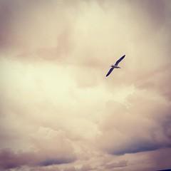 Gaviota (Xpicol) Tags: andaluca islantilla gaviota nubes huelva playa
