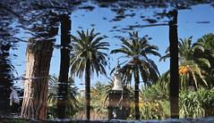 dentro la pozzanghera (mareblu2013) Tags: pozzanghera riflesso giardini ventimiglia liguria giardinetti giardinipubblici