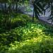 atrium vegetation - Cleveland Museum of Art