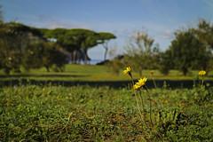 #PointOfView (autobusapedali) Tags: squared baratti tuscany piombino costadeglietruschi itali browsingitaly guardiantravelsnaps huffpostita throughoutitaly whatchthisinstagood tuscanylandscape