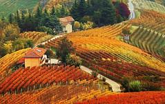 Magic autumn.... (Alex Switzerland) Tags: landscape wine autumn autunno piemonte italia italy paesaggio piedmont colors vigneti weinberge