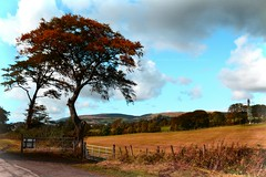 Cleddans Farm (Michelle O'Connell Photography) Tags: autumntrees autumn autumnal autumninscotland autumncolours leaves farm cleddansfarm autumnseason autumn2016 michelleoconnellphotography