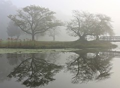 Floating Pond (chantsign) Tags: park mist fog floating morning landscape trees branches bridge water reflection