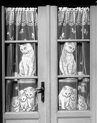 Kittens at the window (Alfredo Liverani) Tags: project project2016 2932016 project365 oneaday photoaday pictureaday project36517 project365101916 project36519oct16 europa italia italy italien italie emiliaromagna romagna faenza faventia faience faenza2016 canong5x canon g5x animal kitten gatto gatta gatti gatte cat cats chats chat katze katzen gato gatos pet pets tabby furry kitty moggy moggies gattino animale ininterni animaledomestico monocromo bianco nero biancoenero bn black white blackwhite bw oldpicture neroamet