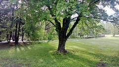 Hillbilly Farm, Cherokee, North Carolina (Yortw) Tags: cameraphone usa america nokia farm may northcarolina cherokee lumia 2013 lumia820