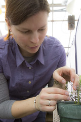 Hannah Gains, entomology (UWMadisonCALS) Tags: insects cranberries entomology pollinators