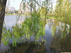 20130505_175825 (MelisaTG) Tags: cameraphone trees woods urbanwoods greenleafs