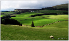 Angus Farmscape (eric robb niven) Tags: landscape cycling scotland spring dundee farmland platinumheartaward canong12 ericrobbniven