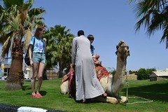 Camel Ride (CiaraBoyle) Tags: sea summer sun holiday fish beach sunshine photography egypt sharmelsheikh el sheikh sharm