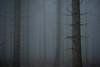 mist (Jos Mecklenfeld) Tags: mist nature misty fog forest natur natuur bos wald ricoh nordrheinwestfalen sauerland winterberg northrhinewestphalia hochsauerland kahlerasten rothaargebirge gx200 ricohgx200 noordrijnwestfalen