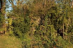 Infanteriebunker A4280 Gippingen Nord ( Militrbunker - Bunker => Baujahr ... ) aus dem zweiten Weltkrieg der Sperre - Sperrstelle Leuggern der Grenzbrigade 5 bei Gippingen im Kanton Aargau in der Schweiz (chrchr_75) Tags: oktober schweiz switzerland suisse swiss christoph svizzera 2014 suissa chrigu 1410 chrchr landesverteidigung hurni chrchr75 chriguhurni chriguhurnibluemailch sammlungkleinesstachelschwein kleinesstachelschwein oktober2014 hurni141028 albumkleinesstachelschweingrenzbrigade5 grenzbrigade5