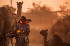 Pushkar fair 2015 (Shyjith Kannur Photography) Tags: pushkar rajasthan people portrait india tribal camels