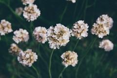 Mum's Garden 1 (katarzynaadamczyk) Tags: flower garden spring vintage canon canon550d sigma sigma1750 colours