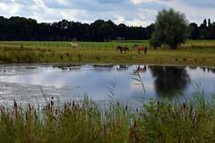Paarden (Werner Willemsen) Tags: paarden horses