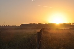 Ochtendnevel (Omroep Zeeland) Tags: hulst groot eiland ochtendnevel