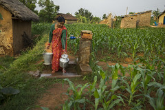 Farmer Maya Devi Panday fetches water from a tap stand in her maize field in Bhamake, Dang. (CIMMYT) Tags: nepal csisa cimmyt maize agriculture smallholder farmer mechanization asia