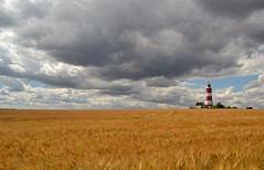 A golden sea (Andrew Boxall) Tags: landscape seascape happisburgh lighthouse clouds blue sky wheat barley crop grain golden sea norfolk coast north east anglia summer 2016 july