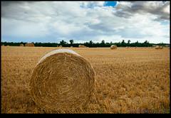 160713-9661-XM1.jpg (hopeless128) Tags: clouds france sky eurotrip 2016 strawbales field haybales bioussac aquitainelimousinpoitoucharen aquitainelimousinpoitoucharentes fr