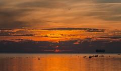 Flying high (frankmh) Tags: sunset geese resund sky landscape seascape hittarp skne sweden outdoor ship carcarrier