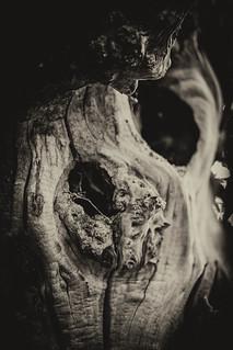 Malevolent Wood