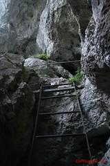IMG_8945 (Pfluegl) Tags: niedersterreich sterreich austria lower wandern hikking hiking wanderlust natur nature autumn summer rock steine geology geologie steinwandklamm klamm gorge canyon