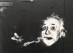 Einstein (svennevenn) Tags: stencils gatekunst streetart bergen rip ripart einstein fly flies fluer