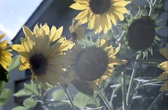 Nifon F90 Kodak Vision3 50D (mattmelcher) Tags: nifon f90 kodak vision3 50d