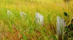Posts in a Marsh (photo fiddler) Tags: grass marsh portmaitland posts september 2016