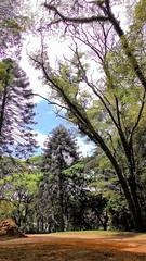 Natureza arbrea (Jos Argemiro) Tags: natureza nature galhos ramos textura contraste parque jardim floresta ar areo ramification branches texture contrast park forest garden aerial air wood grove arvoredo mata bosque biodiversidade botnica botany biodiversity
