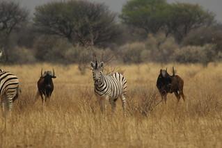 Namibia Plainsgame Hunt - Kalahari Desert 15