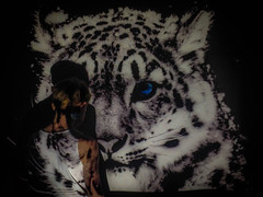 Projector (Morgan Tb) Tags: body whitetiger white snowleopard leopard snow tiger projection projector