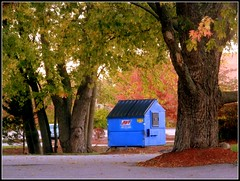 Autumn Trees & Blue Shack - Photo Taken by STEVEN CHATEAUNEUF On October 14, 2016 - Auto Color,  Auto Contrast, Warmly, And Saturation Were All Added On October 15, 2016 by Using Picasa 3 - All Work by STEVEN CHATEAUNEUF (snc145) Tags: autumn fall seasons tress leaves foliage shack ground concrete chelmsford massachusetts usa photo picasa3editing october142016 october152016 stevenchateauneuf autofocus vividstriking