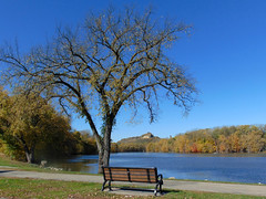 Bench by the river (novice09) Tags: hbm benchmonday mississippiriver tree barnbluff ipiccy redwing