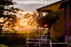 | THE SUN ASSIMILATION - Bangladesh | (mdanwarhossain) Tags: sun tree balcony evening rays light sunset awesome colors nature eco decoration green shadow house red